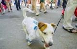 В центре Киева, парад собак